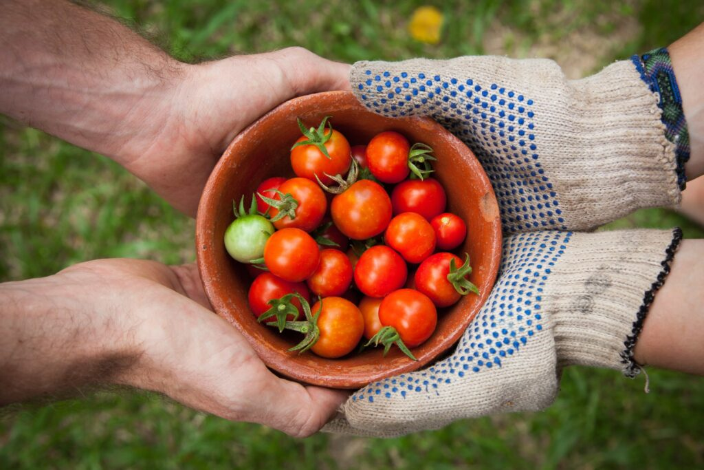Two pairs on hands holding a bowl of freshly picked tomatoes on either side, one pair is wearing gardening gloves